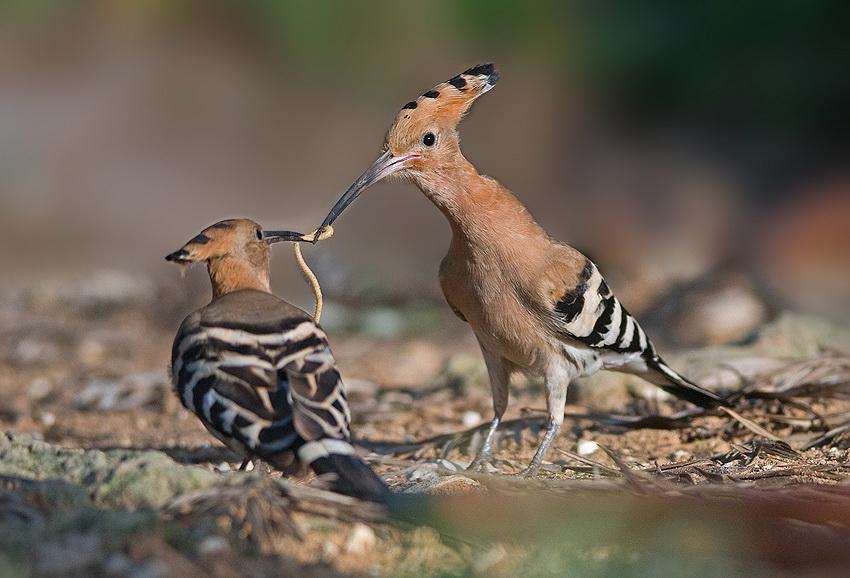 324 Удивительные фотографии птиц Яки Зандера