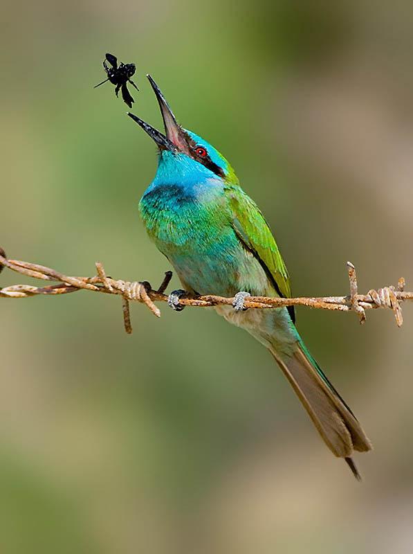 333 Удивительные фотографии птиц Яки Зандера