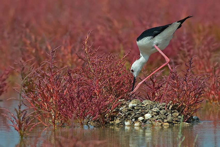 343 Удивительные фотографии птиц Яки Зандера