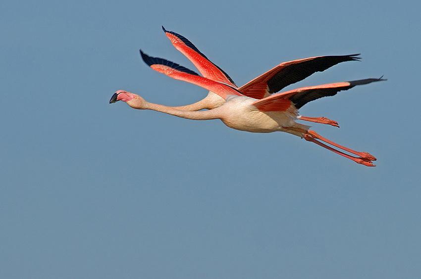 362 Удивительные фотографии птиц Яки Зандера