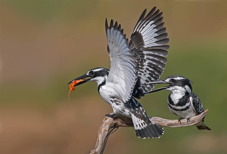 372 Удивительные фотографии птиц Яки Зандера