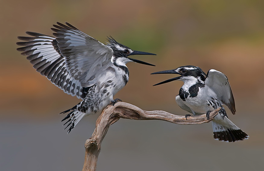 382 Удивительные фотографии птиц Яки Зандера