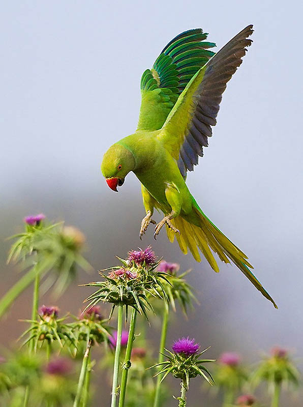 392 Удивительные фотографии птиц Яки Зандера