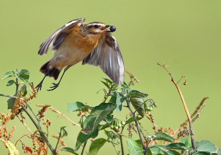 402 Удивительные фотографии птиц Яки Зандера
