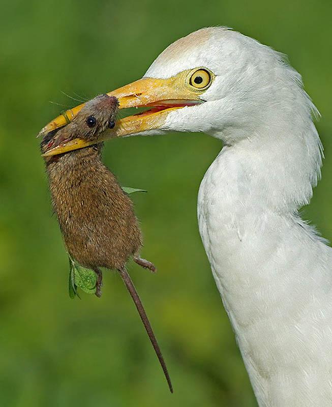 413 Удивительные фотографии птиц Яки Зандера