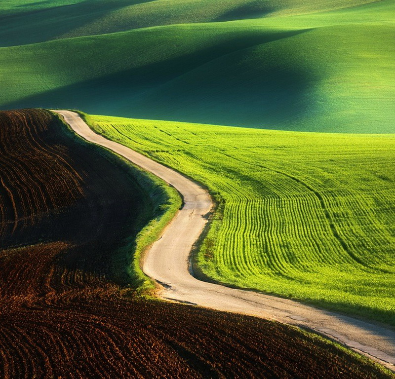 Потрясающие зеленые поля