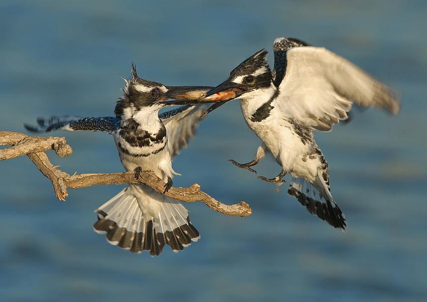 422 Удивительные фотографии птиц Яки Зандера