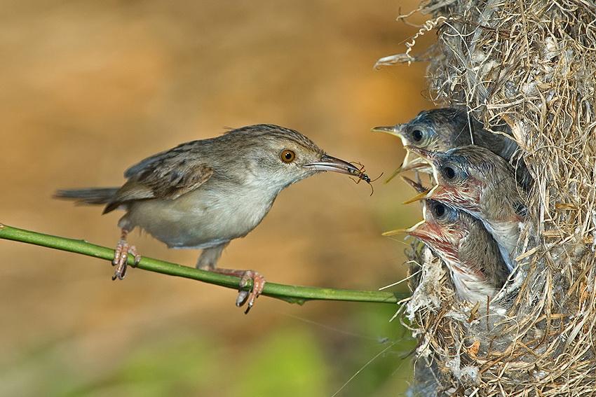 Удивительные фотографии птиц Яки Зандера.