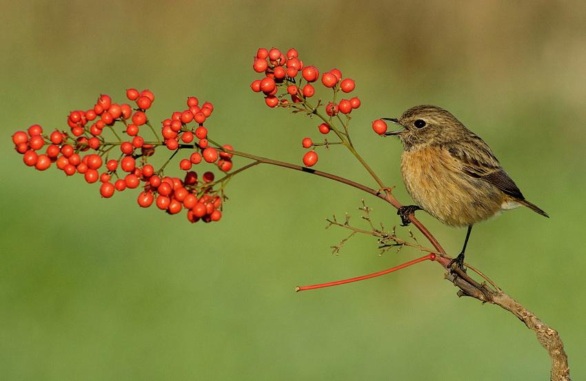 461 Удивительные фотографии птиц Яки Зандера