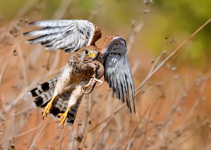 471 Удивительные фотографии птиц Яки Зандера