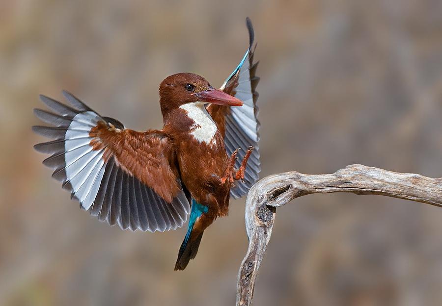 48 Удивительные фотографии птиц Яки Зандера
