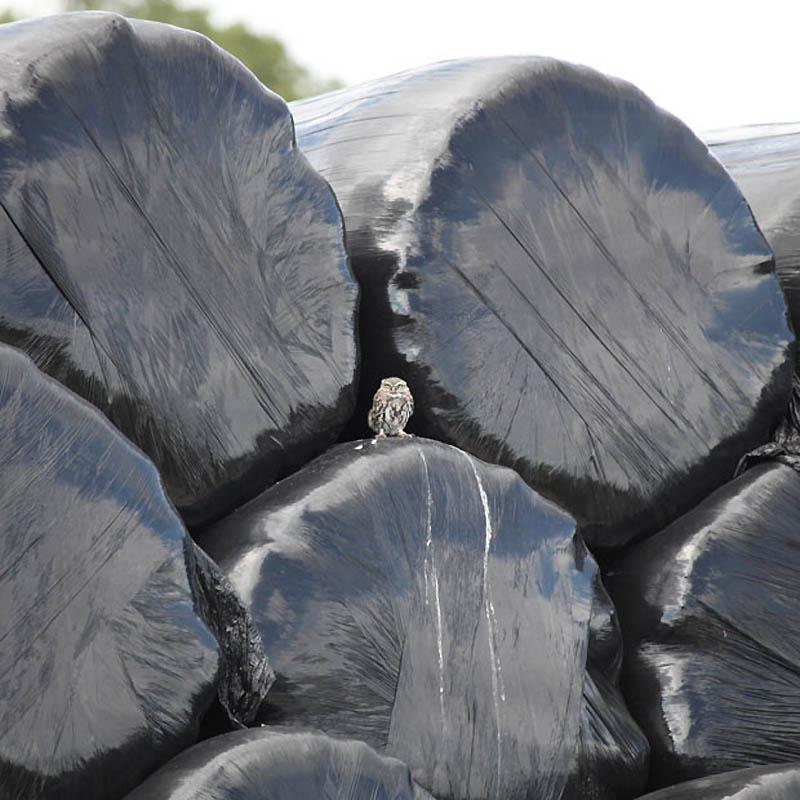 Для вас - мусорный бак, для птиц - подходящее гнездо