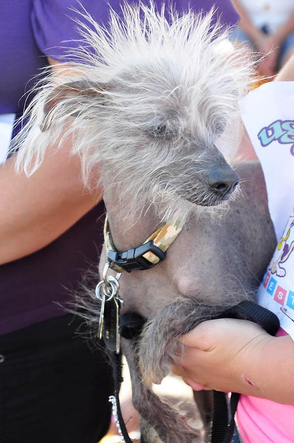 Конкурс на звание самой уродливой собаки