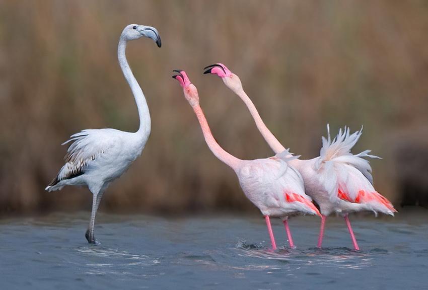 65 Удивительные фотографии птиц Яки Зандера