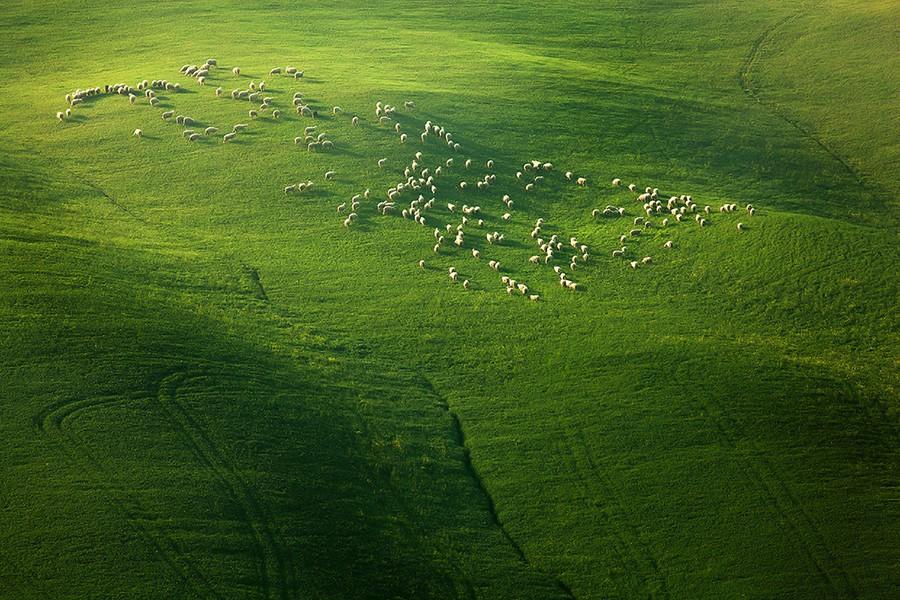 7103 Потрясающие зеленые поля