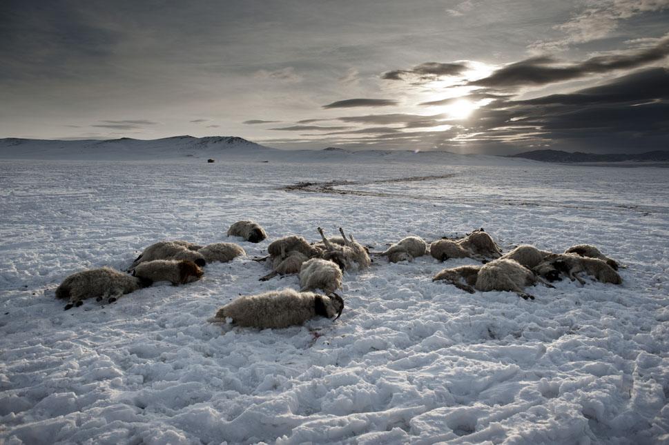 Монголия: потерянный рай