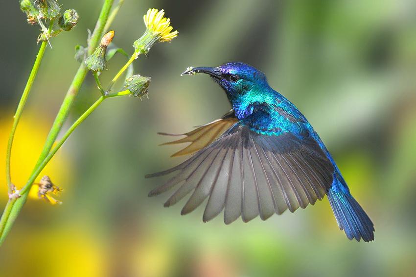 75 Удивительные фотографии птиц Яки Зандера