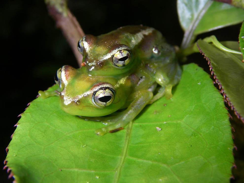 Удивительные создания Мадагаскара