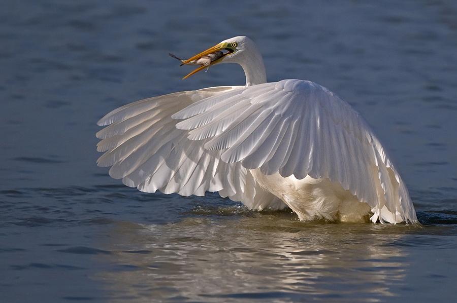 85 Удивительные фотографии птиц Яки Зандера