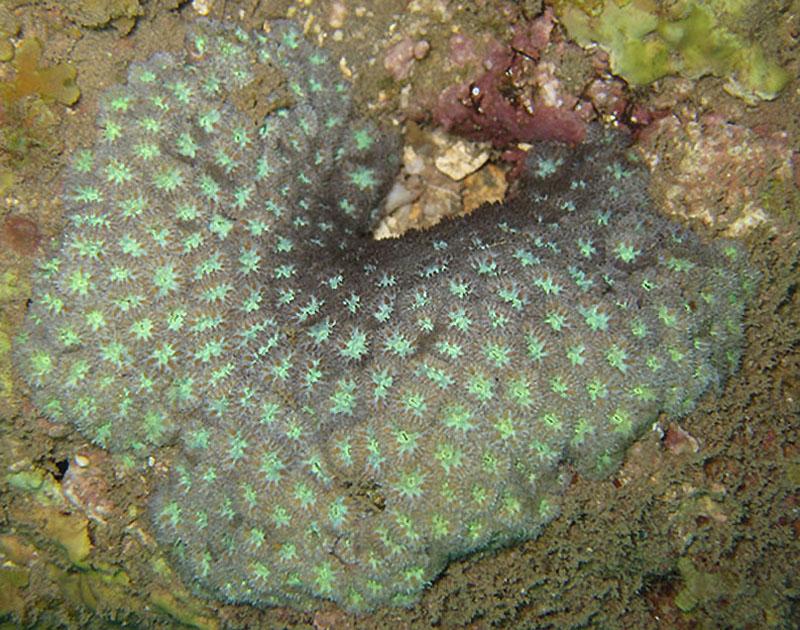882 Кораллы, нуждающиеся в защите