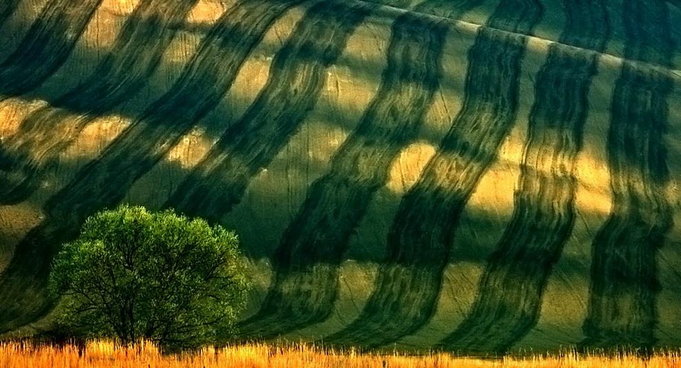 894 Потрясающие зеленые поля