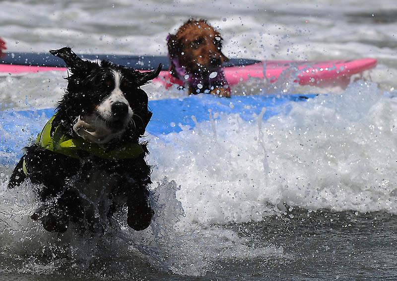 Снова собачий серфинг