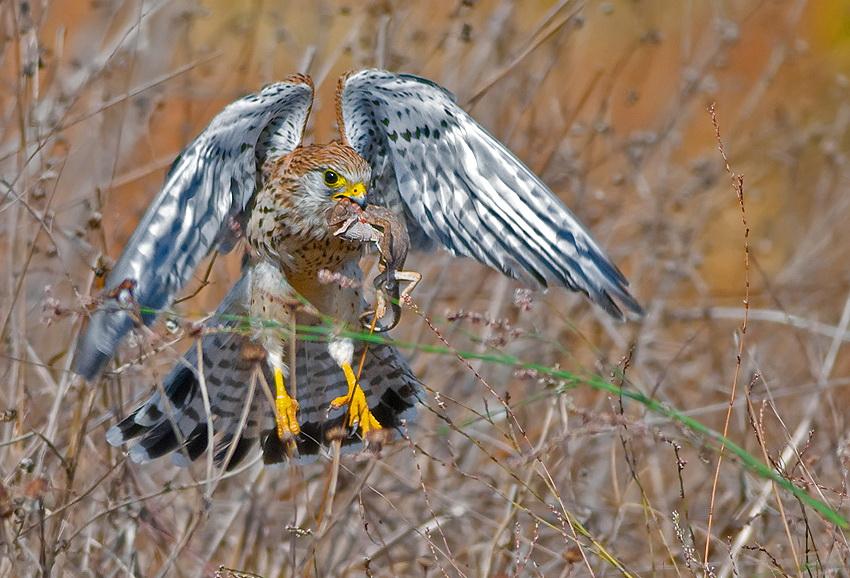 95 Удивительные фотографии птиц Яки Зандера