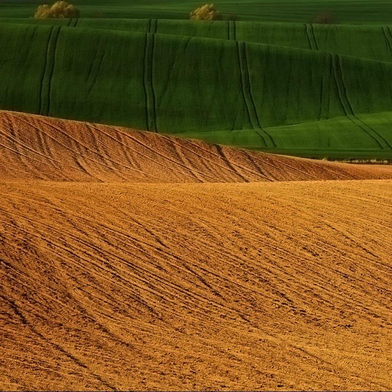 993 Потрясающие зеленые поля
