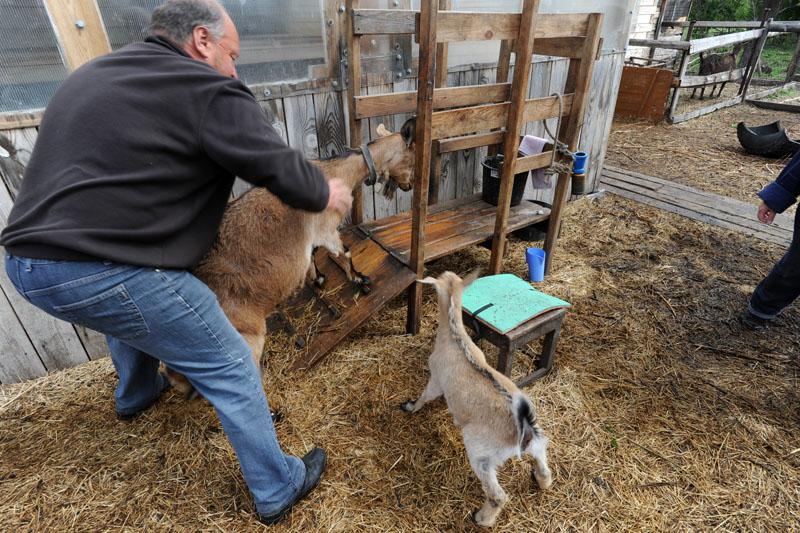 Секс человека и козы