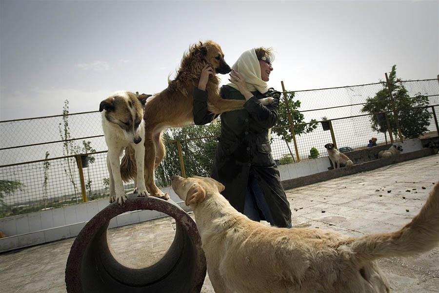 Заявление На Выгул Собак