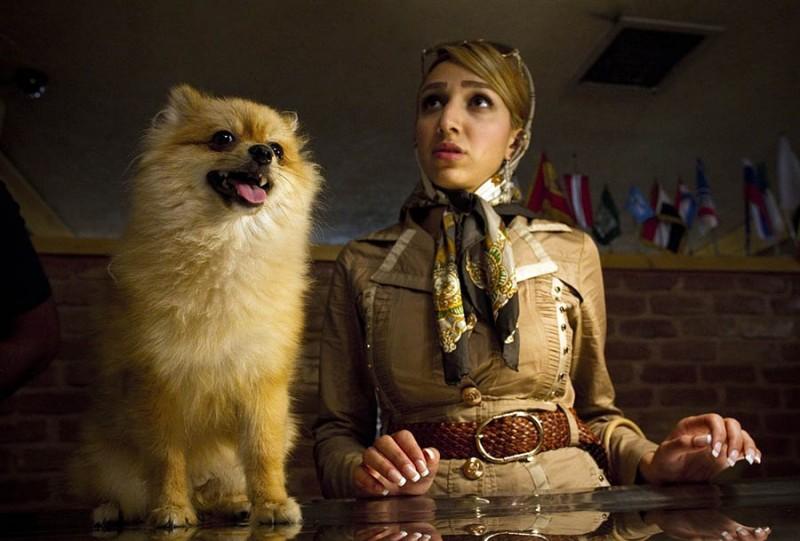 http://bigpicture.ru/wp-content/uploads/2011/07/110713-iran-dogs3-10a.photoblog900-800x541.jpg