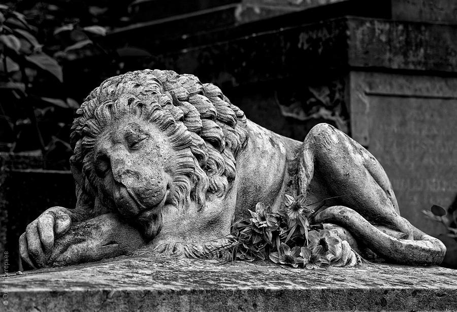 Львов. Лычаковское кладбище (фоторепортаж)