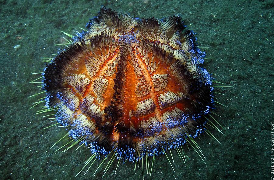 18112 подводный зоопарк удивительных