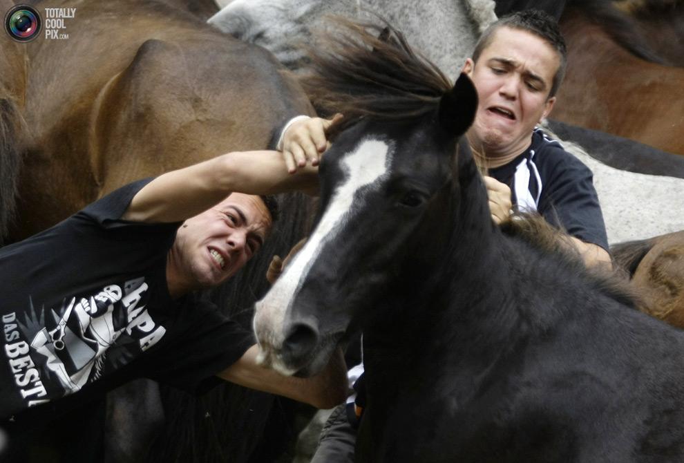 Укрощение лошадей: Фестиваль Rapa das Bestas