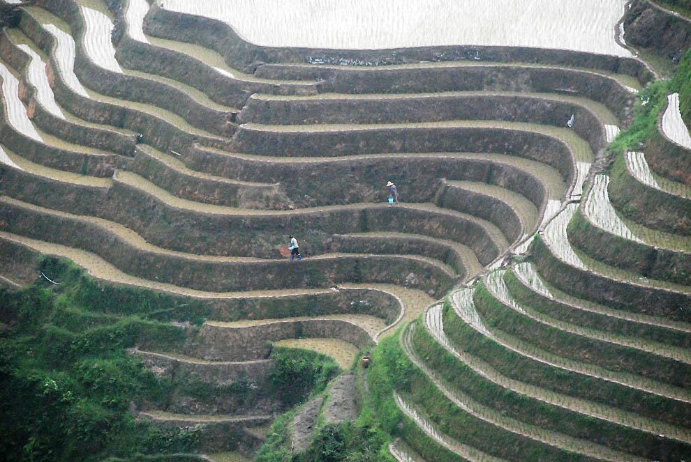 Рисовые террасы