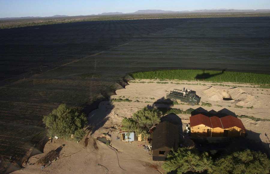 350026 plants marijuana recouverts ecran tissu В Мексике обнаружена крупнейшая в истории плантация марихуаны