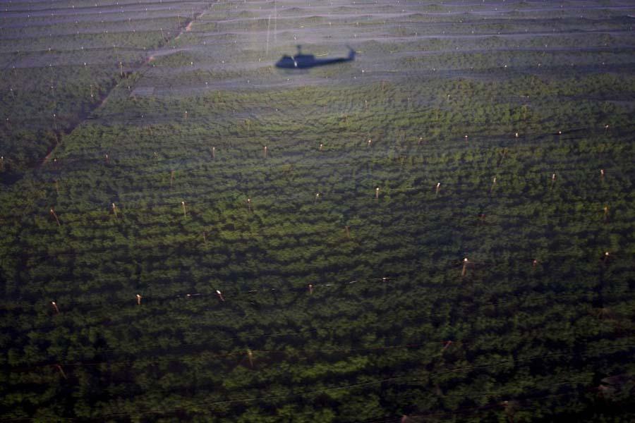 350027 plantation comprenait egalement annexes bois В Мексике обнаружена крупнейшая в истории плантация марихуаны