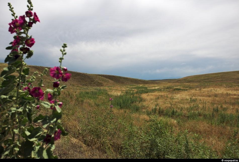Зеленое проклятье Чуйской долины