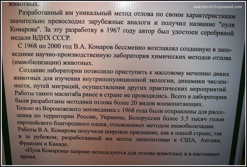 Удивительное рядом - бобропитомник под Воронежем