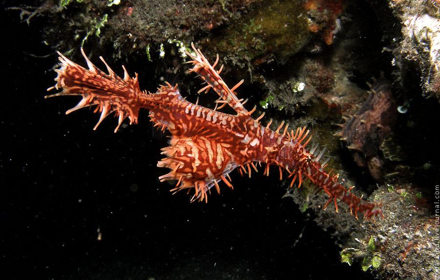 Пролив Лимбе – подводный зоопарк удивительных существ, о. Сулавеси, Индонезия