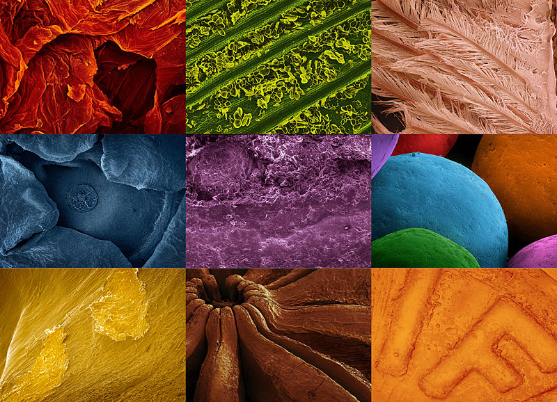 Микробы под микроскопом для детей: картинки и видео 81