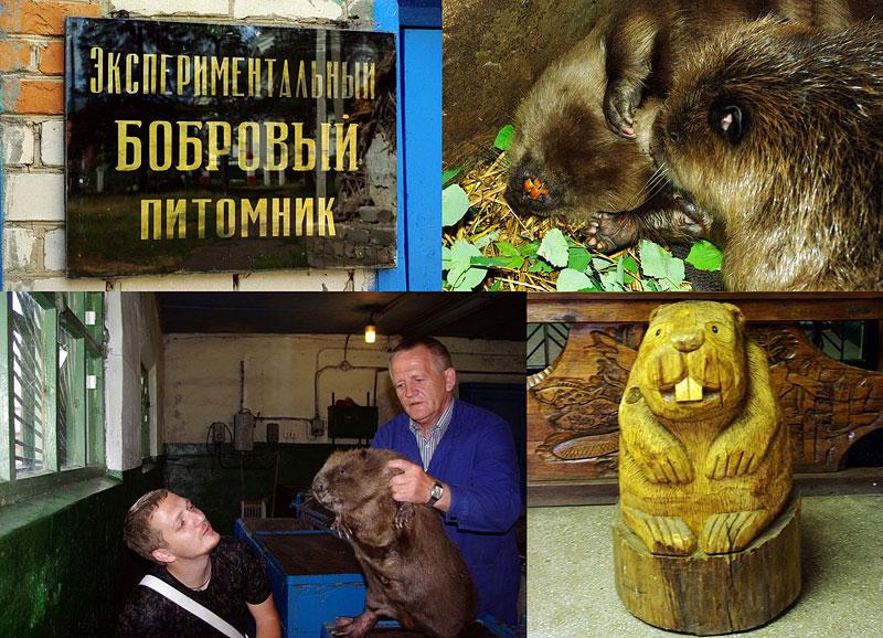 Бобропитомник под Воронежем