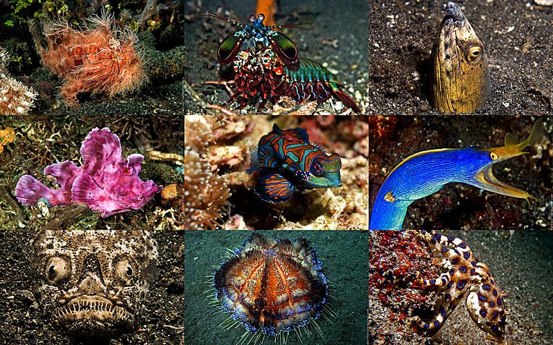 Подводный зоопарк удивительных существ в Индонезии