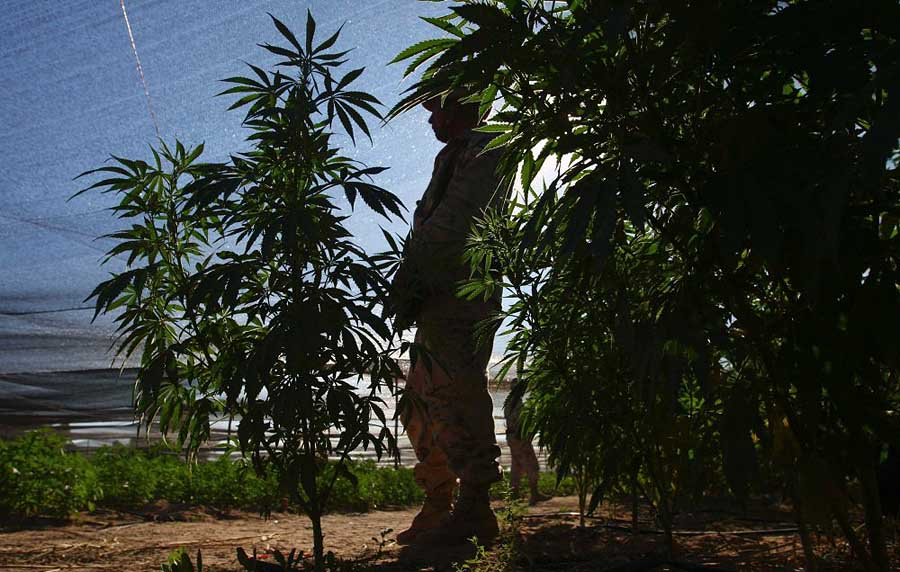 O 1000 680 680 2011 07 14T173239Z 01 MEX105 RTRMDNP 3 MEXICO DRUGS.JPG2963161995814772964 В Мексике обнаружена крупнейшая в истории плантация марихуаны