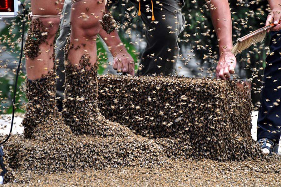 bee01 Китайца облепили 26 кило пчел
