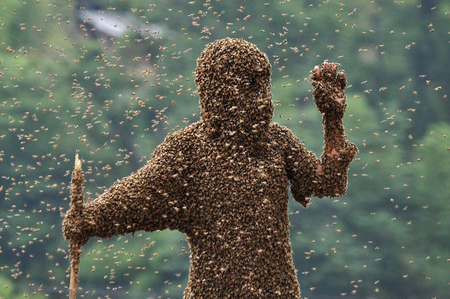 bee06 Китайца облепили 26 кило пчел