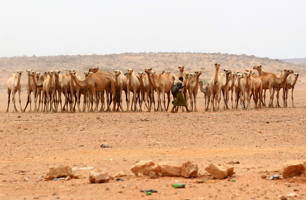 hungymamafrika29 Голод в Восточной Африке