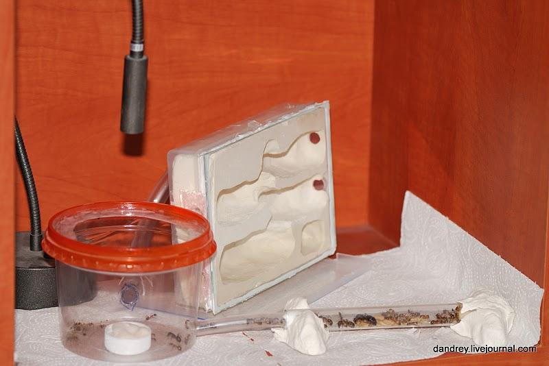 Муравейник в домашних условиях (45 фото)