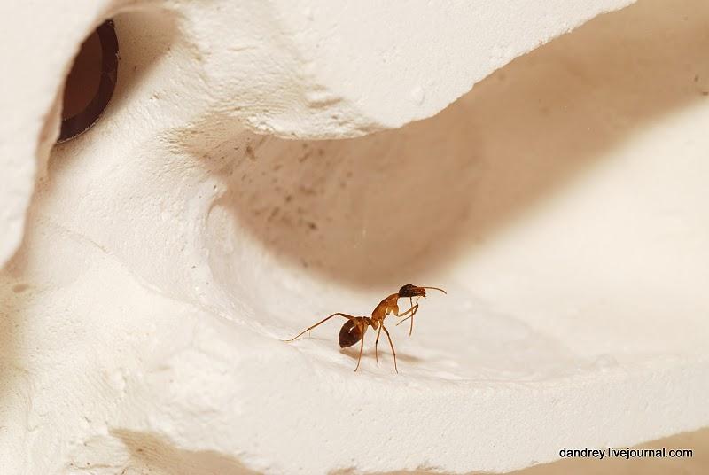 15104 Строительство искусственного муравейника