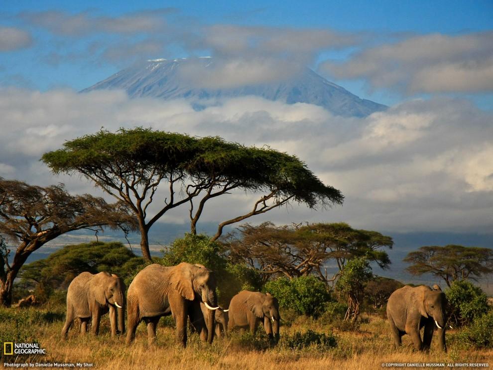 Фото National Geographic за июль 2011